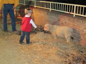Ethan petting the lamb